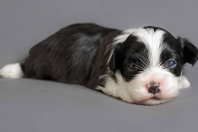 Nephritis In Dogs