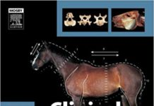 clinical anatomay of horse