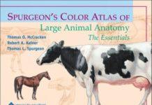 veterinary anatomy ebook