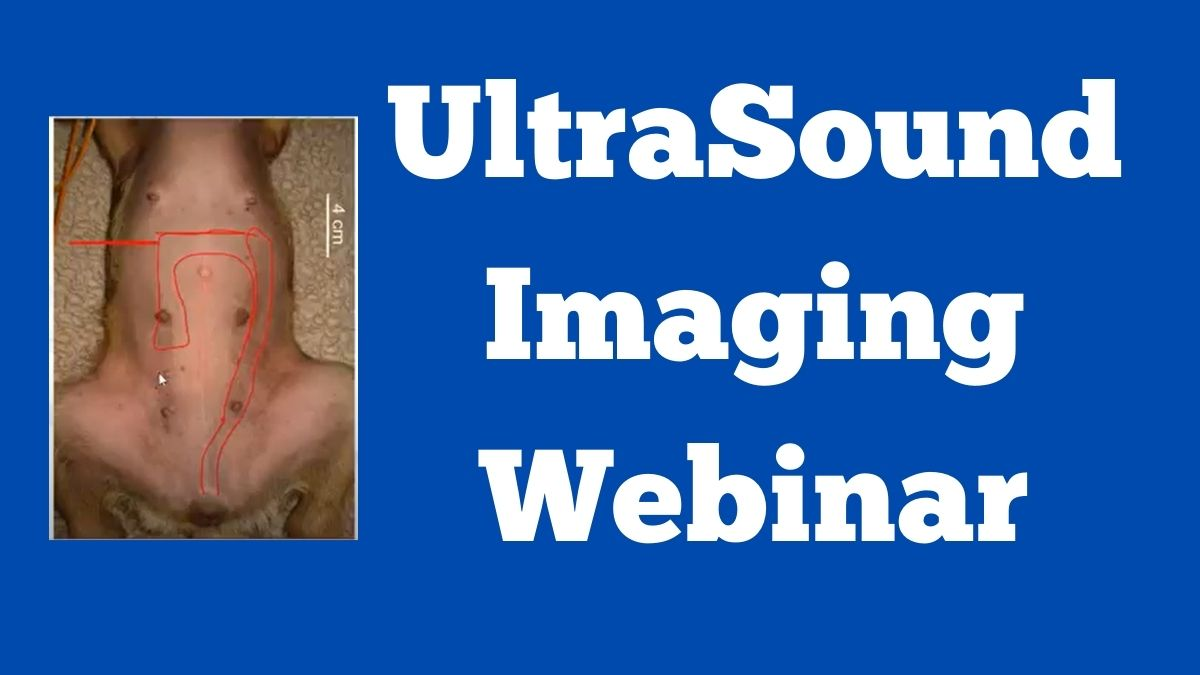UltraSound Imaging Webinar