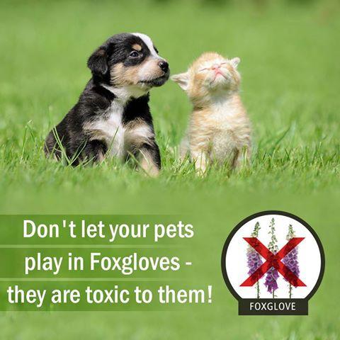 Beware of Toxic Plants!!!