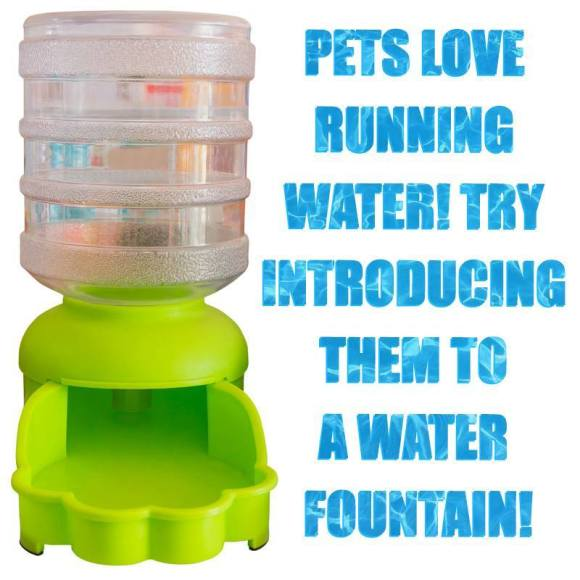 Try a Water Fountain for Your Pet!