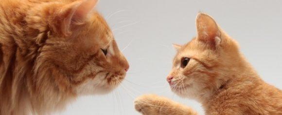9443_cats