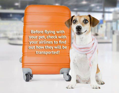 Flying With Your Dog…