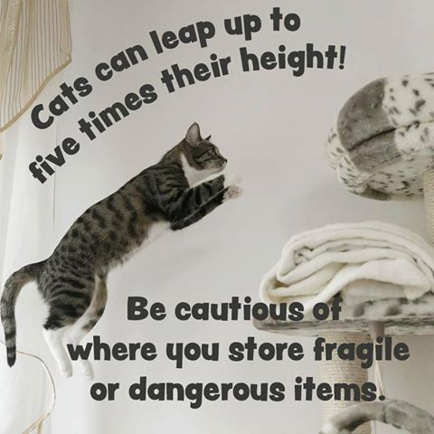 Cat Owners, Be Careful Where You Store Things!