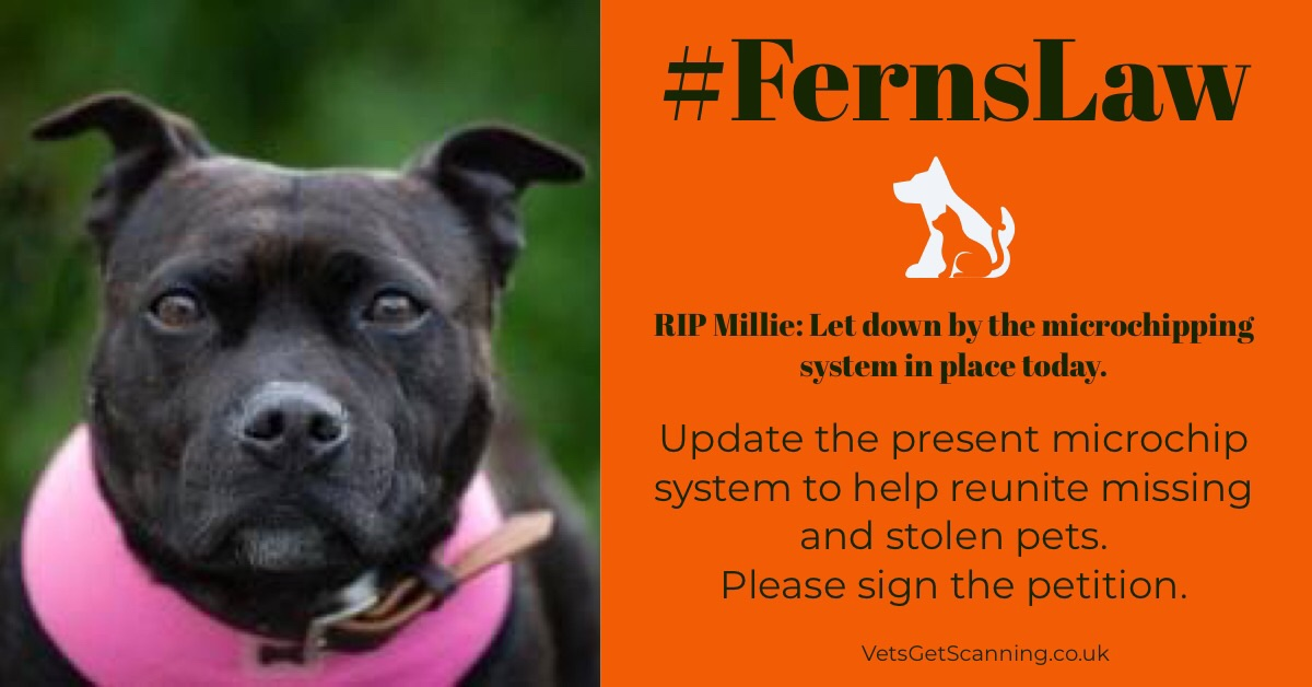 #FernsLaw could have prevented MILLIE from being put to sleep!