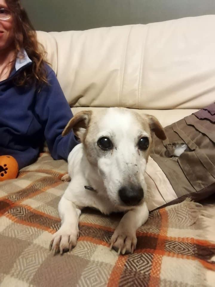 Stolen Dora safely back home but vet failed to detect her microchip! #FernsLaw
