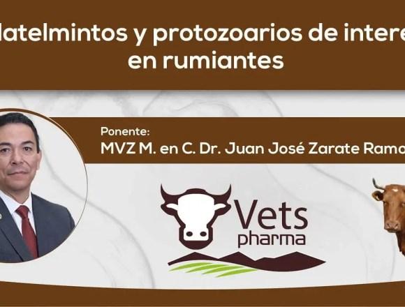 Platelmintos y protozoarios de interés en rumiantes