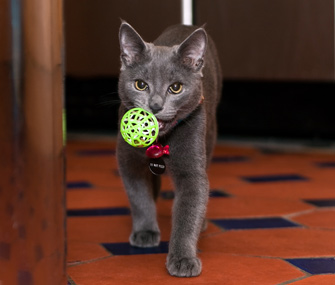 Image result for cat fetch