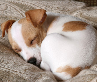 Cute Dog Stretching Wallpaper Why Does My Dog Curl Up In A Ball When He Sleeps