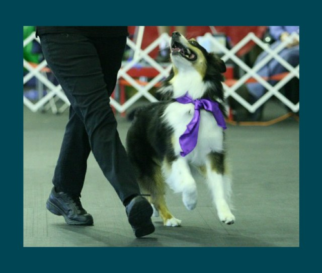 Human Canine Duos Cool Dance Moves Left Side Heel