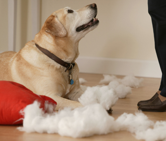 Our Dog Is Chewing Everything — How Can We Make Him Stop?