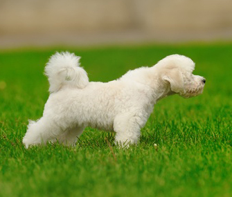 Image result for puppy poopy dance