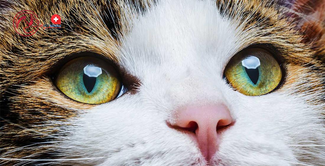 Kako prepoznati parazite u organizmu, Usni paraziti kod macaka Virusi kod macaka