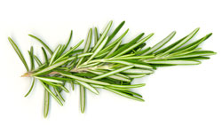 Rosemary Natural Cures for Raynaud's Disease