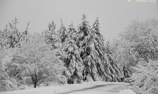 Зимна пътна обстановка. снимка: Пламен Трифонов