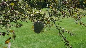 hornet nest in plainwell