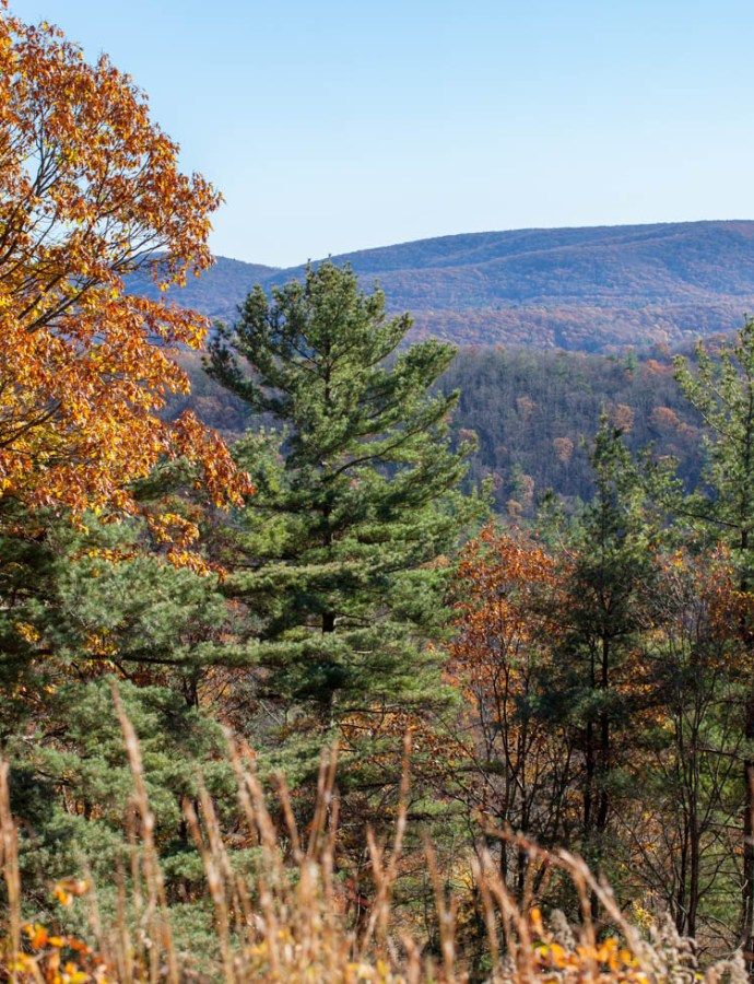 Take a drive down Sky Line Drive in Shenandoah National Park