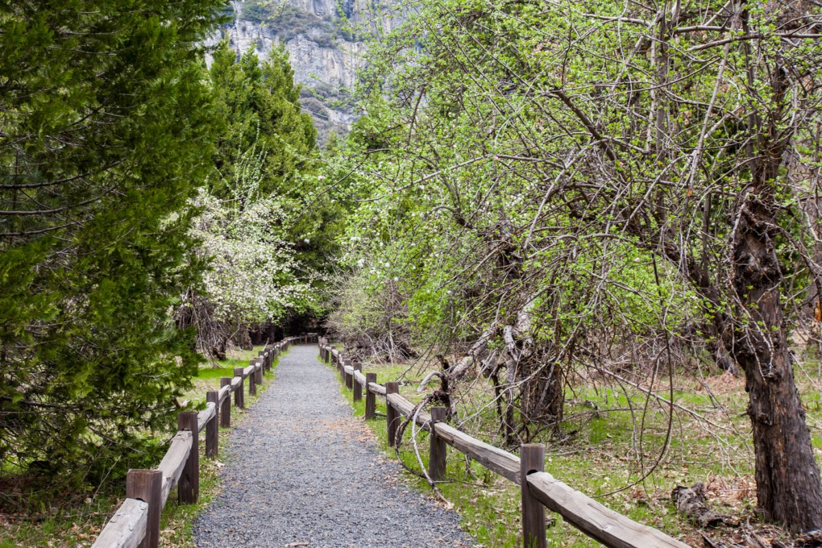 Lower Yosemite Fall - My Favorite Hike at Yosemite National Park #vezzaniphotography
