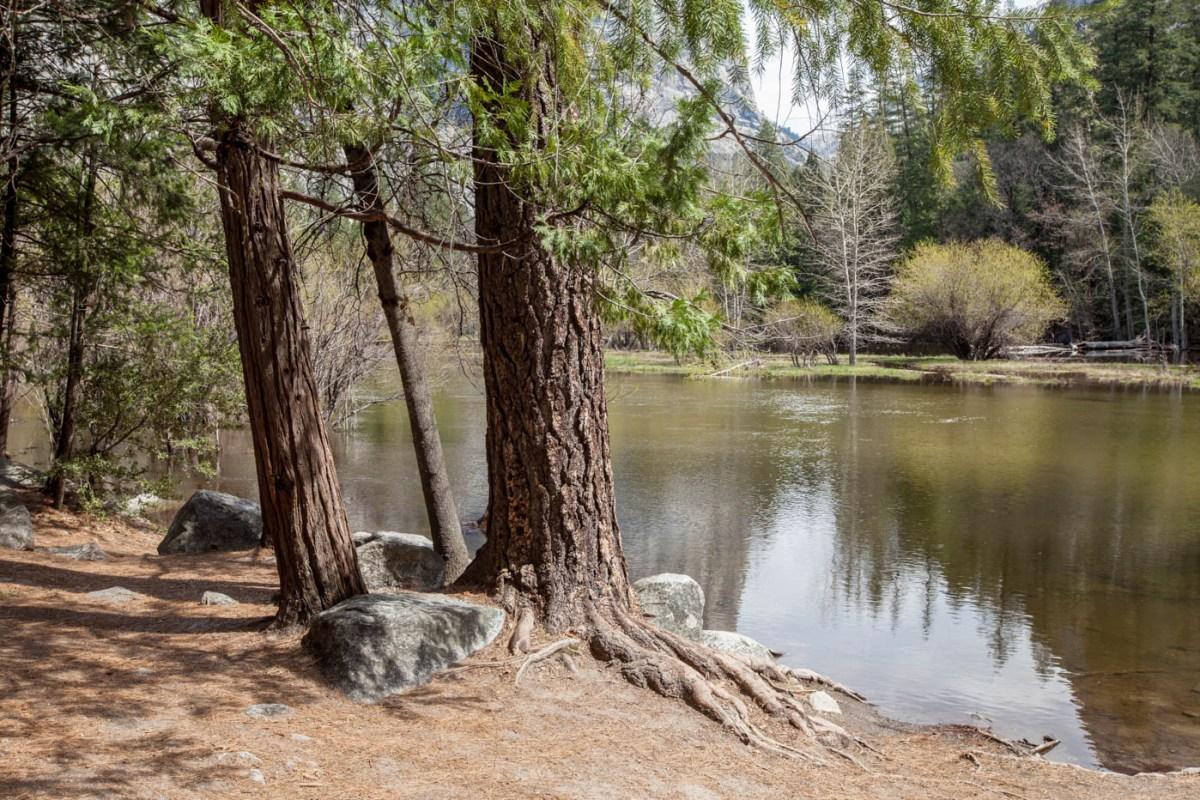 Mirror Lake Trail at Yosemite National Park #vezzaniphotography