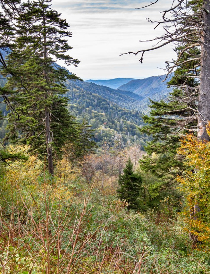 Must See Locations Along Newfound Gap Road, Great Smoky Mountains
