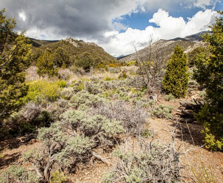 Great Basin National Park is Worth Visiting!