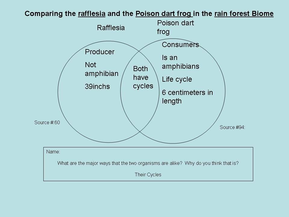 deciduous forest food chain diagram stingray anatomy tropical rainforest: rainforest vs