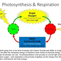 Water Cycle Diagram With Questions Shear Stress And Bending Moment Photosynthesis & Respiration - Vista Heights 8th Grade Science