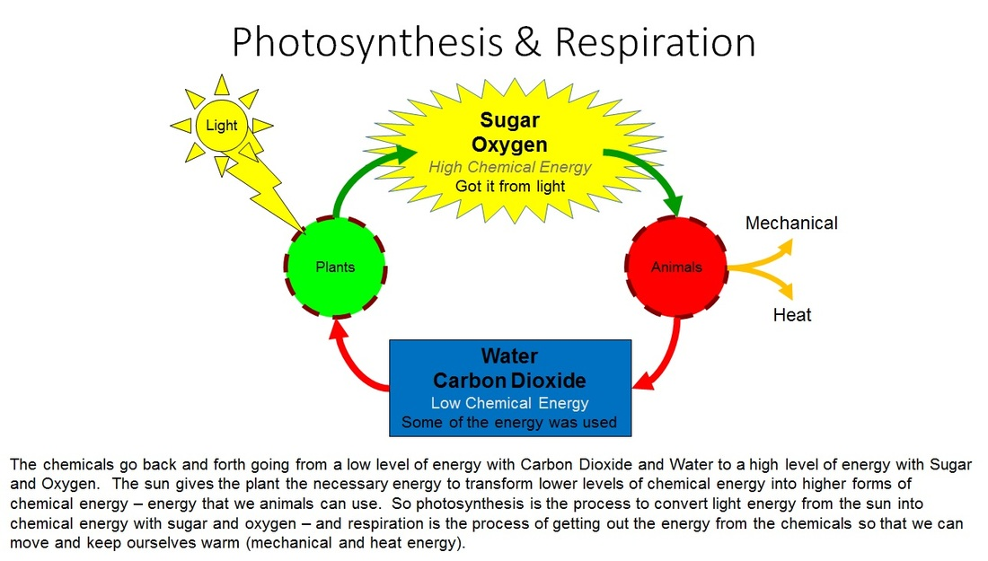 water cycle diagram with questions peugeot 207 wiring photosynthesis & respiration - vista heights 8th grade science