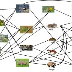 Savanna Animal Food Chain Diagram Motorcycle Charging System Wiring Tropical Best Library Grizzly Bear Foodstutorial Org Biome Rainforest