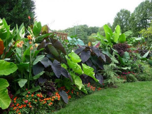 amazing tropical landscaping