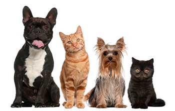 grapes-raisins-dogs-cats-1