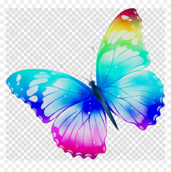 Transparent Background Butterfly Clipart HD Png Download vhv