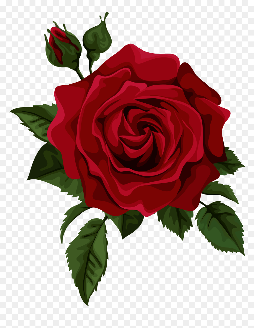 Rose Drawing Png : drawing, Drawing, Transparent
