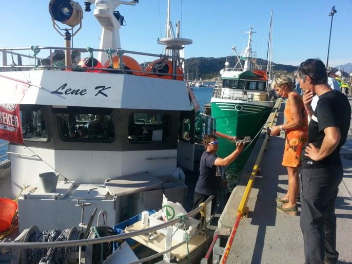 Crevettes fraiches du bateau