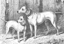 anunturi caini pierduti bucuresti secolul XIX