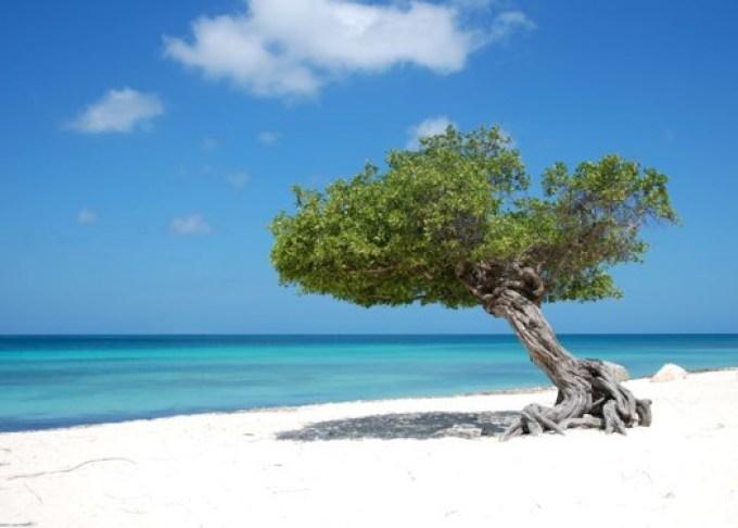 Eagle Beach_Aruba2