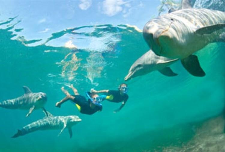 golfinhos_Bahamas_Foto Atlantis Bahamas