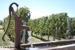 Vinhos e muito mais em Mendoza