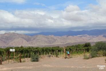 Fiambalá, entre vinícolas e termas