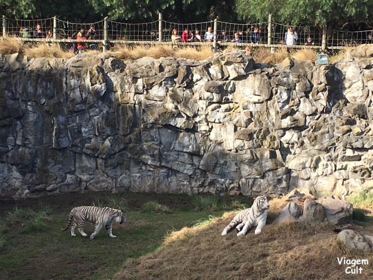 temaiken leões
