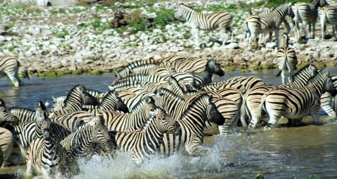 Etosha Nationa Park, na Namíbia (foto: Eduardo Vessoni)