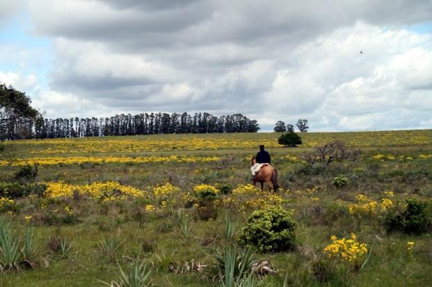 Área rural de José Ignacio (foto: Eduardo Vessoni)