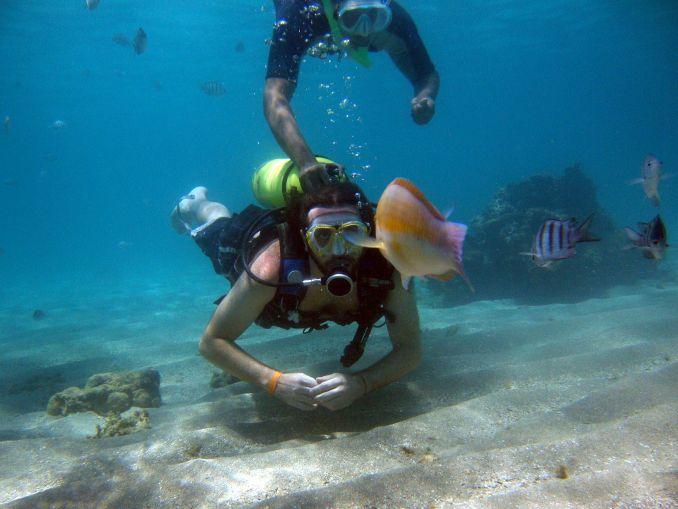 Mergulho guiado em Maragogi, norte de Alagoas (foto: Maragogi Divers/Divulgação)