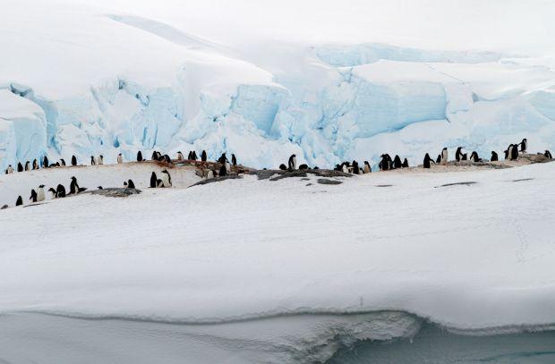 VER PINGUINS AOS MONTES: Colônia de pinguins em Jougla Point, na Península Antártica (foto: Eduardo Vessoni)