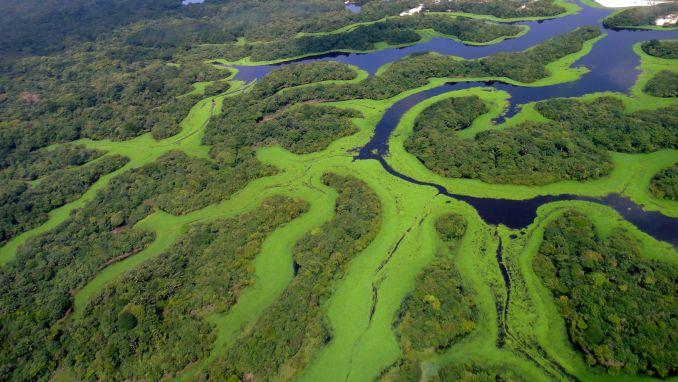 Vista aérea do Parque Nacional de Anavilhanas (foto: Wikimedia Commons)