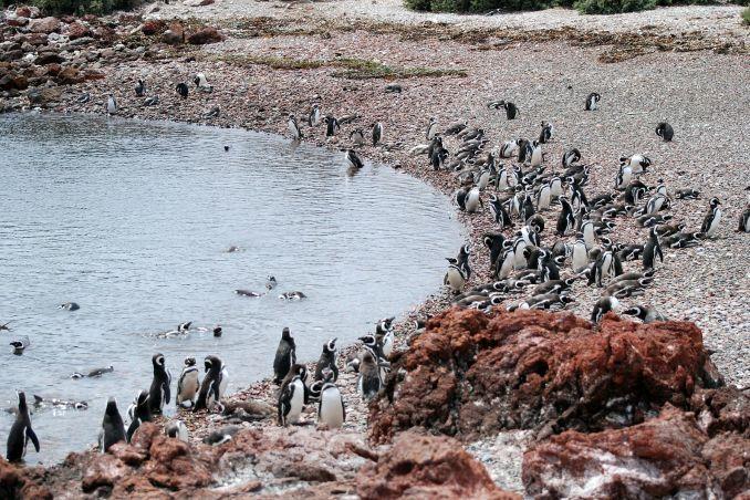 Punta Tombo (foto: Don Faulkner/Flickr-Creative Commons)