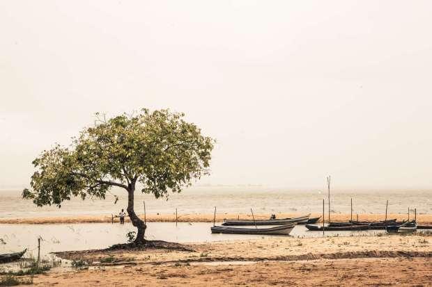 Flona do Tapajós (foto: Wkimedia Commons)