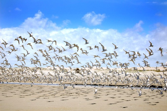 Praia do Cassino (foto: Eduardo Wickboldt/Flickr-Creative Commons)