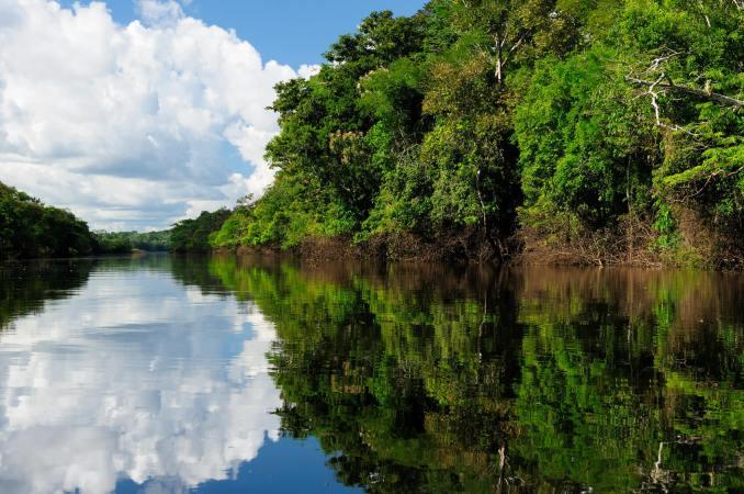 A Amazônia é cenário do filme colombiano 'O Abraço da Serpente'(foto: Fotolia/trrrivago)